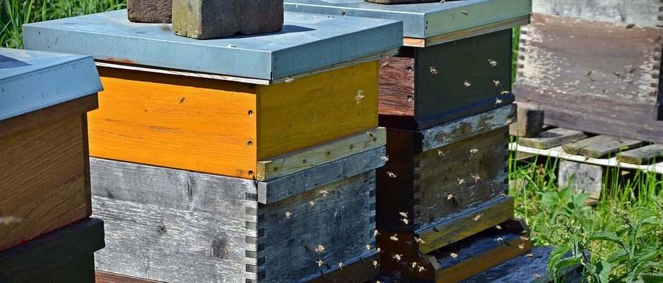 bijenkast maken