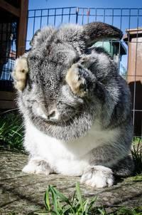 buitenren konijn zelf maken